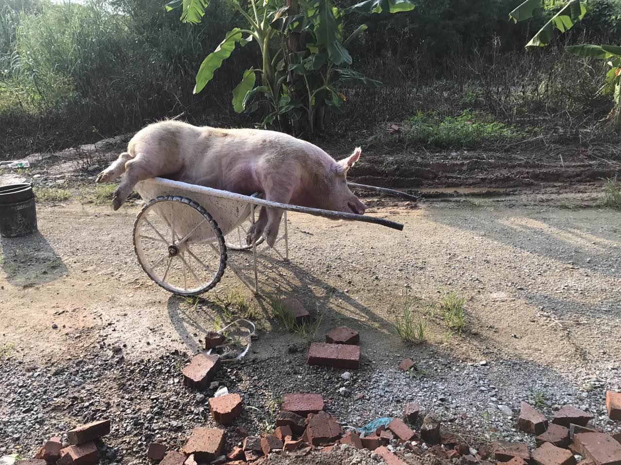扬翔亚计山楼房养猪1期 焚烧炉 工程案例 第6张