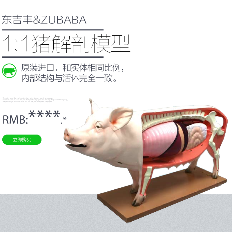 FHK原尺寸猪模型 配种舍 母猪舍 怀孕舍 分娩舍 育肥舍 公猪舍 其他产品 第1张