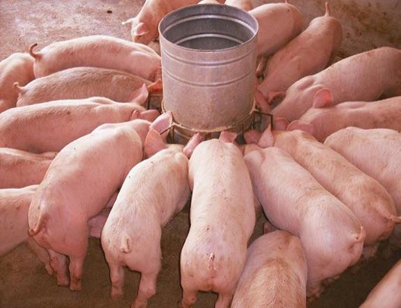高效省料仔猪料槽和传统料槽的区别是怎样的呢?