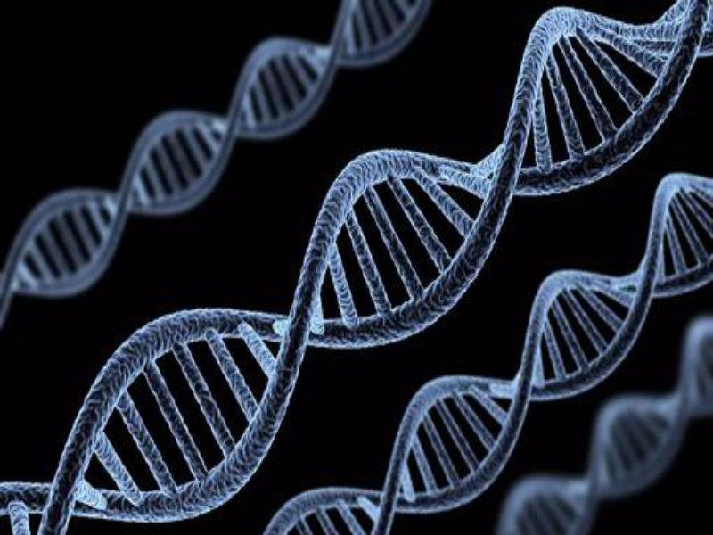 什么是基因编辑?基因编辑造福养猪业