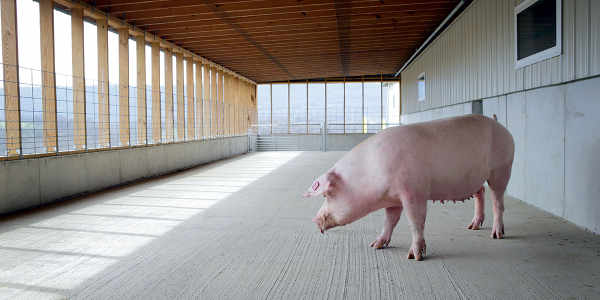 humane-pig-farming-porch.jpg