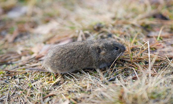 老鼠图2.jpg