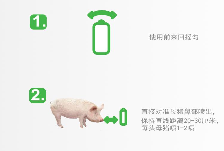 母猪诱情剂 发情检测 母猪舍 配种舍 母猪输精 第15张