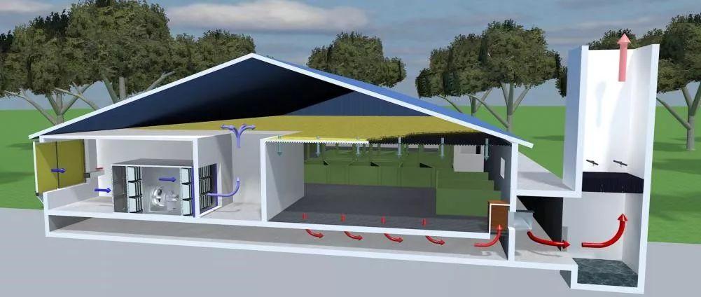 现代化公猪站的设计要点 养猪知识 第5张